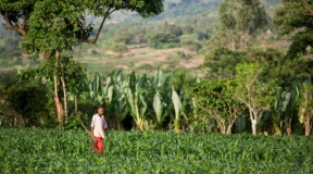 East Africa: Technology Helping East Africa Unlock Agriculture Potential